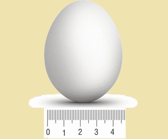 Размер яйца