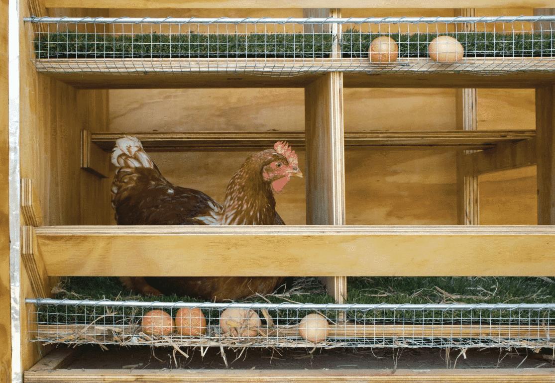 Гнезда с яйесборником