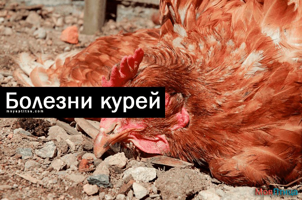 Распространенные заболевания у кур