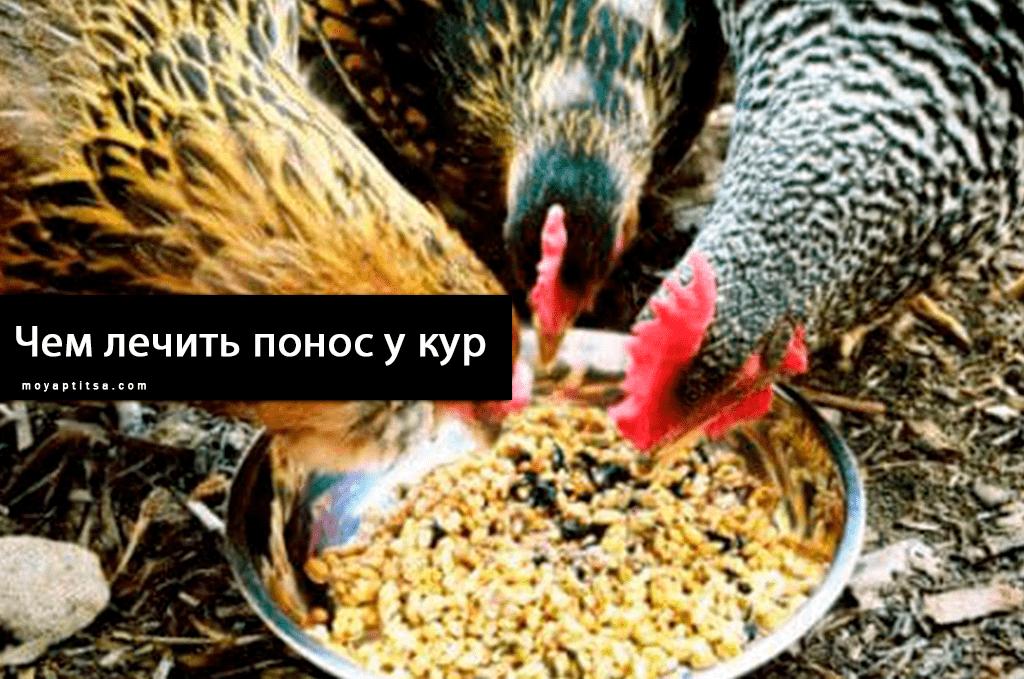 Чем лечить понос у кур