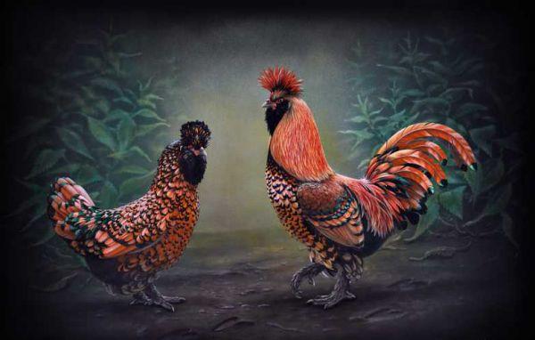 Красота павловских кур вдохновляет даже художников