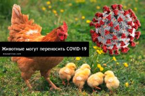 Ученые выяснили какие домашние животные могут переносить COVID-19
