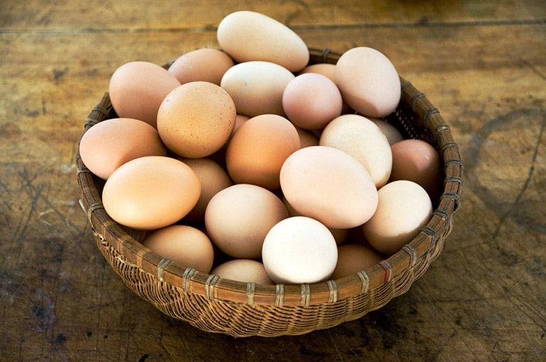 Яйценоскость птиц